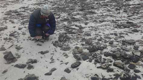 More Finds on Sanday – Archaeology Orkney