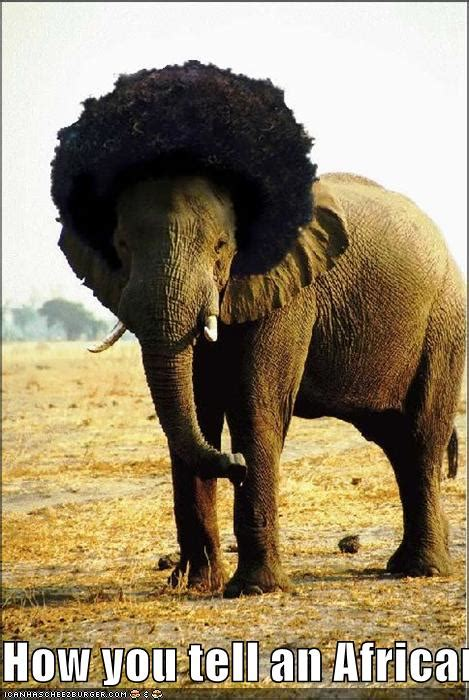 How you tell an African elephant from an Asian elephant
