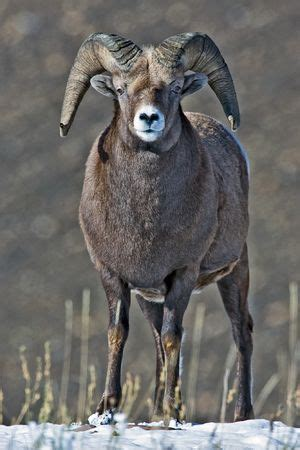 Mammals of Montana Facts for Kids