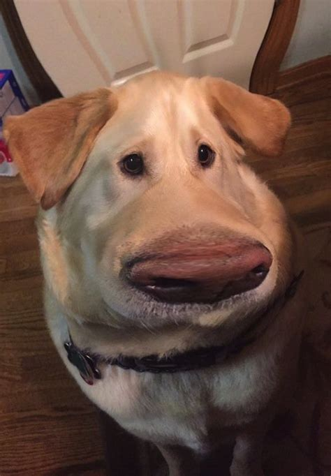 This Cool 'Snapchat' Filter Will Make Your Dog Look Like